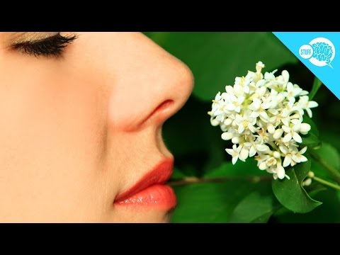 Why Do You Stop Noticing Smells After A While?