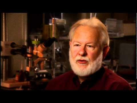 David Nichols: How can we use a non-human model to model the psychedelic state?