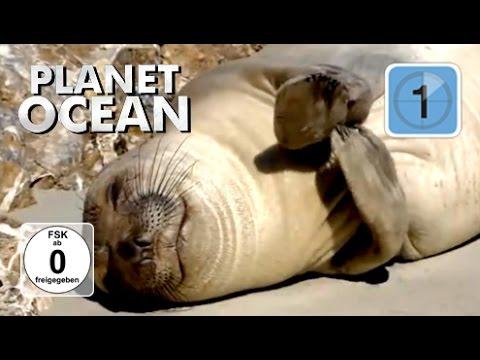 Planet Ocean 2 – Giganten der Weltmeere – Die Seetangwälder and der Westküste der USA (Doku)