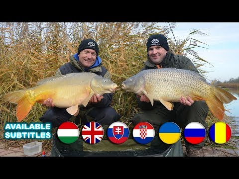 Coldwater Feeder Fishing for Carp  part 20. a movie by Gábor Döme  Rapid Big Carp Fishing