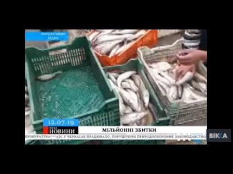 ТРК ВіККА: Черкаські горе-рибалки завдали збитків на майже півтора мільйони гривень