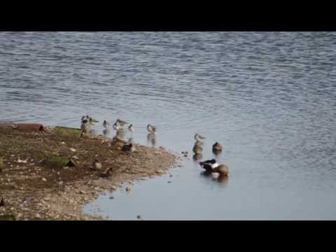 Brownsea Winter Wildlife