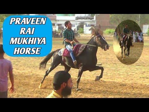 PRAVEEN RAI MUKHIYA HORSE IN RAUNAHI SARFARAZ KHAN HORSE RACE