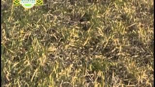 Panorama Agropecuario N°243/1 Herbicida Glifosato Cond.y Dir. Ing.Agr.Hernán Viera