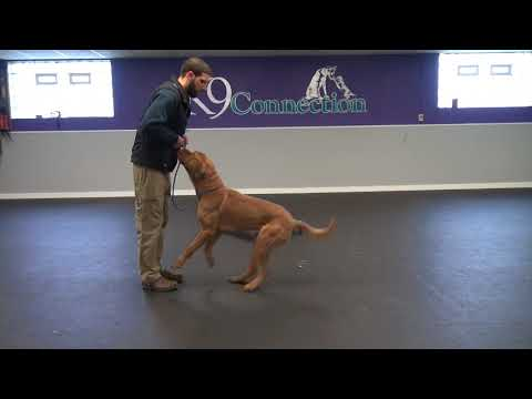 Aggressive Dog Training | K9 Connection Buffalo, NY