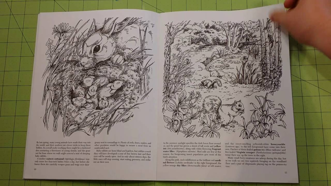 The A Walk In Woods Adult Coloring Book Review Flip Through Dover