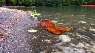 Озеро Рица Абхазия(Наиболее известное из всех природных чудес Абхазии — высокогорное озеро Рица, сказочно красивое, чистое,..., 2016-06-11T15:29:19.000Z)