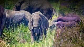 Akagera National Park - Visit Rwanda
