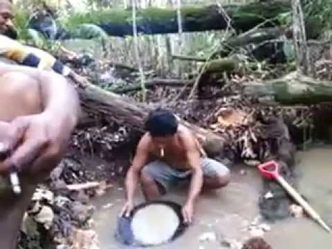 looking for gold in borneo