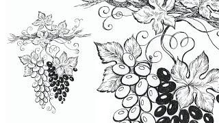 Тушь-Перо. Рисуем Виноград. / Pen & Ink. Grapes Drawing. Speed Painting.