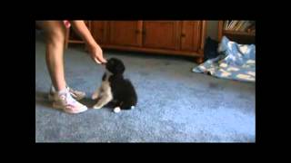 Best Puppy Training Classes - How to house Train a Puppy?