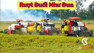 Quá đã khi máy cắt kubota dc93   dc70 cùng nhau gặt lúa ngã đồng Châu Thành An Giang