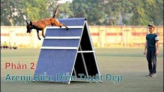 P2: Huấn Luyện Chó Malİnois Vâng Lời Tuyệt Đối/ Training Malinois in Vietnam/ NhamTuatTV