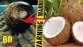 60 SECONDS Experiment - SHREDDING VS Coconut | CRASH TEST