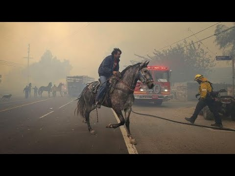 California Wildfires Cause People And Their Animals To Flee