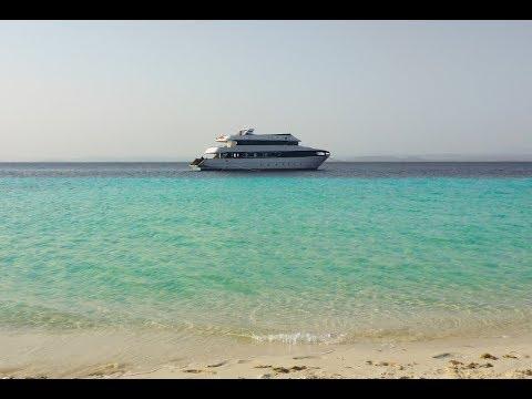 Un bateau pour nager avec les dauphins sauvages