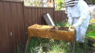 Top Bar Hive Update 5th March 2014