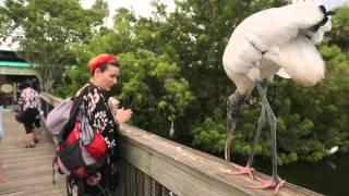 Настя Короткая и страшная птица! Орёл и Решка