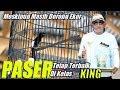 Masih Dorong Ekor Tetap Juara  Kelas King Murai Batu Paser Milik Achonk  Mp3 - Mp4 Download