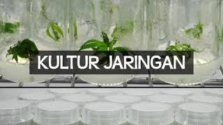 Video Bahan Media Kultur Jaringan download MP3, 3GP, MP4, WEBM, AVI, FLV Januari 2018