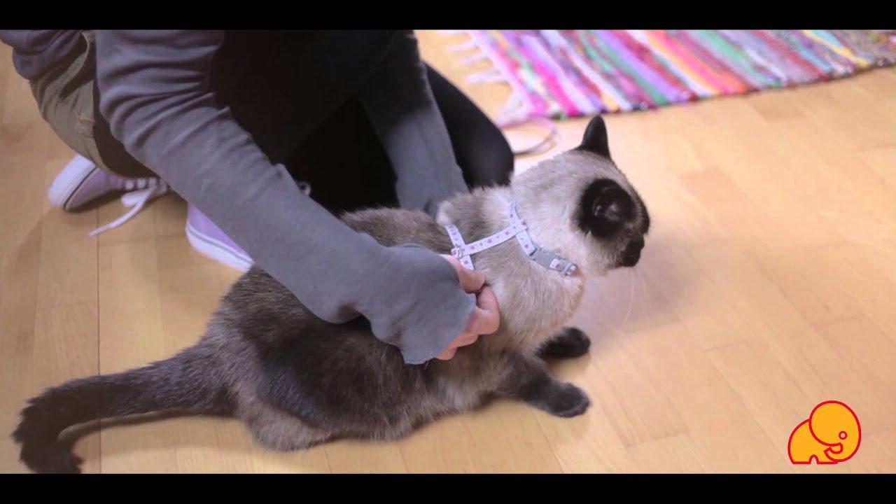 Besplatni uski mokri maca video