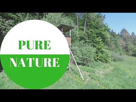 PURE NATURE: Wald und Wiesen in GERMANY