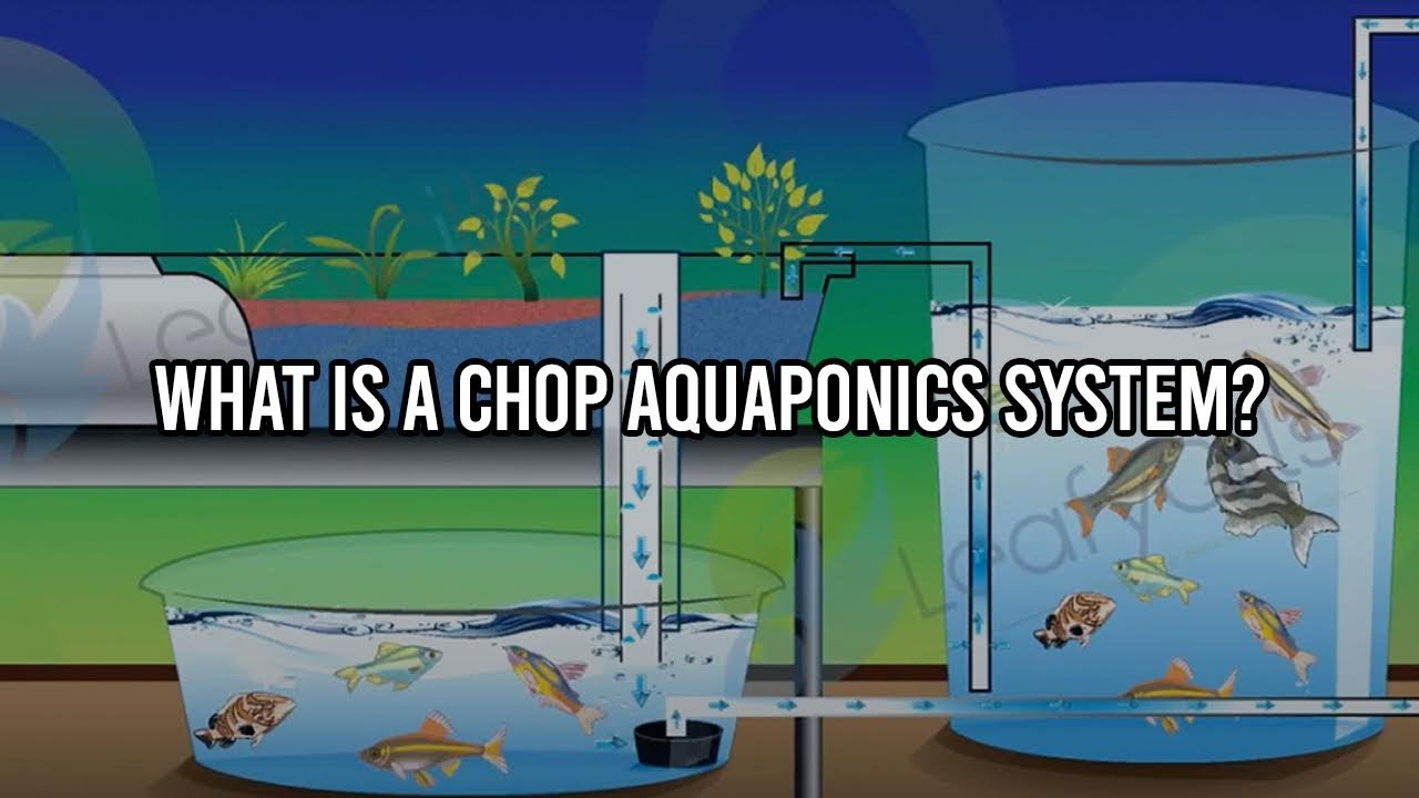 What Is A Chop Aquaponics System Youtube