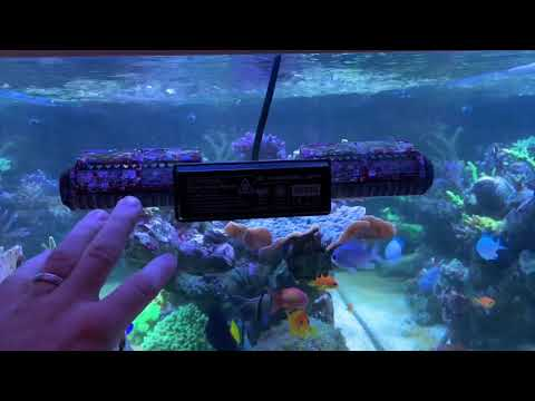 Update 1 Jahr Red Sea Peninsula 650/ Strömung Im Raumteiler