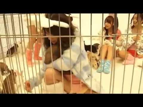 AKB48 うさぎと撮影 ゆきりん泣く