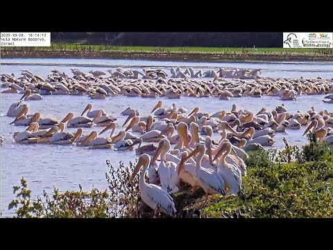 Hula Nature Reserve Cam|Israel Nature \u0026 Parks Authority|The Charter Group Of Wildlife Ecology