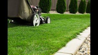 Sådan får du en tæt grøn græsplæne uden mos