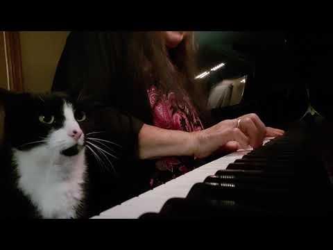 Felix the Tuxedo cat loves piano music