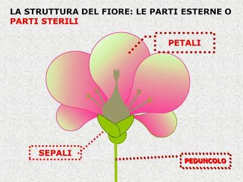 Come posare piastrelle a mosaico - Le Piastrelle - Posare ...