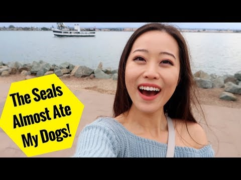 Seals Wanted to EAT My DOGS... [VLOG]