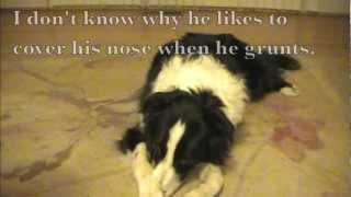 Capturing A Crazy Grunting Sound: Clicker Dog Training