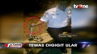 Nahas, Viral Video Satpam Tewas Digigit Ular Weling