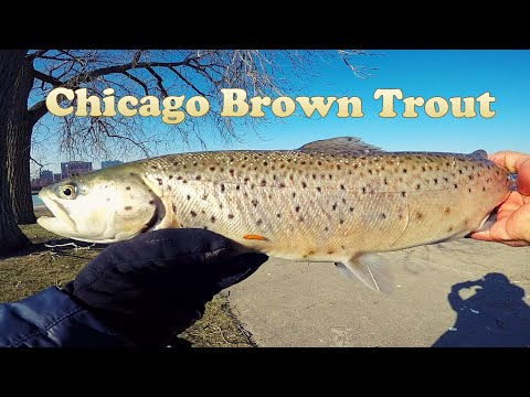 Chicago Winter Brown Trout Fishing