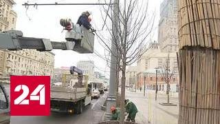 видео Работа на деревьях в Москве