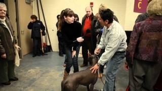 Xoloitzcuintli | Victoria Stilwell At Westminster Dog Show