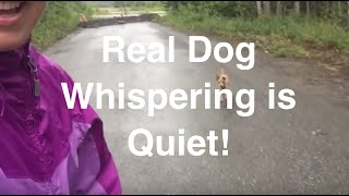 How To Train Your Dog To Come To A Whisper (pt 2 Of 3)