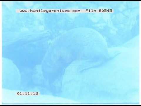 Operation Drake: 54: Coastal Wildlife, 1970s - Film 80545