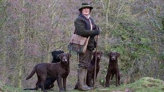 Working Labrador Retrievers With Grangemead Labradors