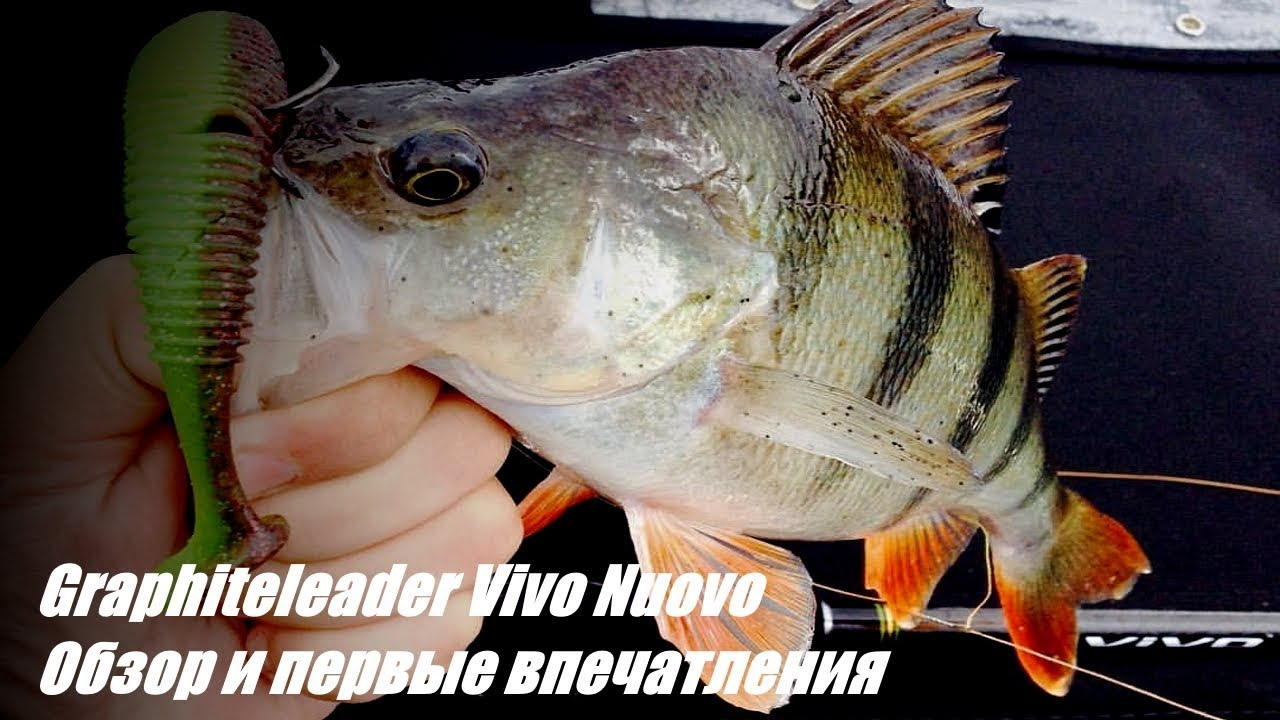 Graphiteleader Vivo Nuovo. Обзор и первые впечатления ...