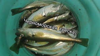 Ловля Мерланга Голыша на Черном море