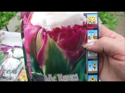 Царские и роскошные тюльпаны, крокус, подснежник, нарцисс!!! Посадка!