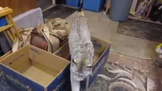 Max Canada Lynx Box & Roll