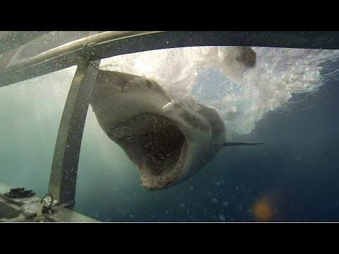 Shark Cage Diving -South Australia-Rodney Fox