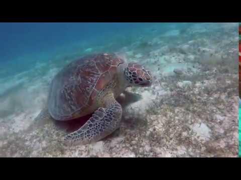 Apo Reef || Explore Occidental Mindoro Travel & Tours