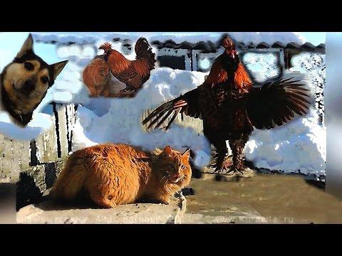 #3 Кот, Пёс и Павловский Петух Танцуют все Dancing all Cat, Dog and PAVLOV Rooster
