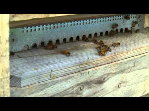 Ruche 2 ( abeilles buckfast ) 8 mars 2014